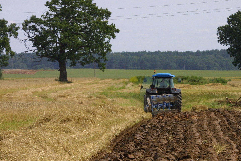 Ko gero, niekas neprieštarautų, kad vietinių ūkininkų auginama produkcija atsidurtų ir ant darželinukų stalo. Tačiau šis mechanizmas sunkiai veikia.<br>M.Patašiaus nuotr.