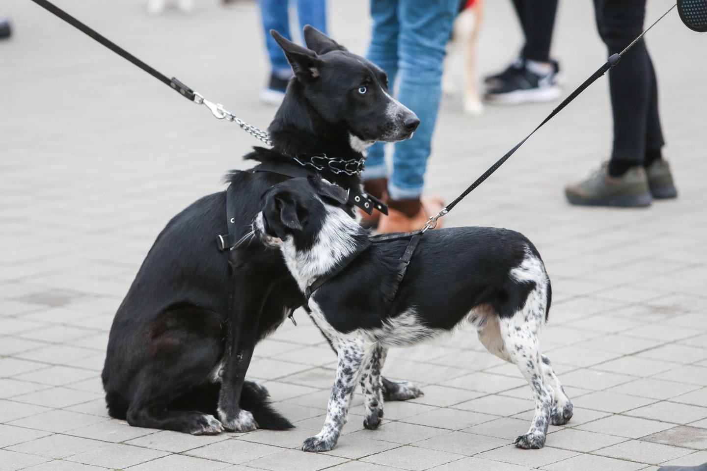 Šunys.<br>G.Bitvinsko nuotr.