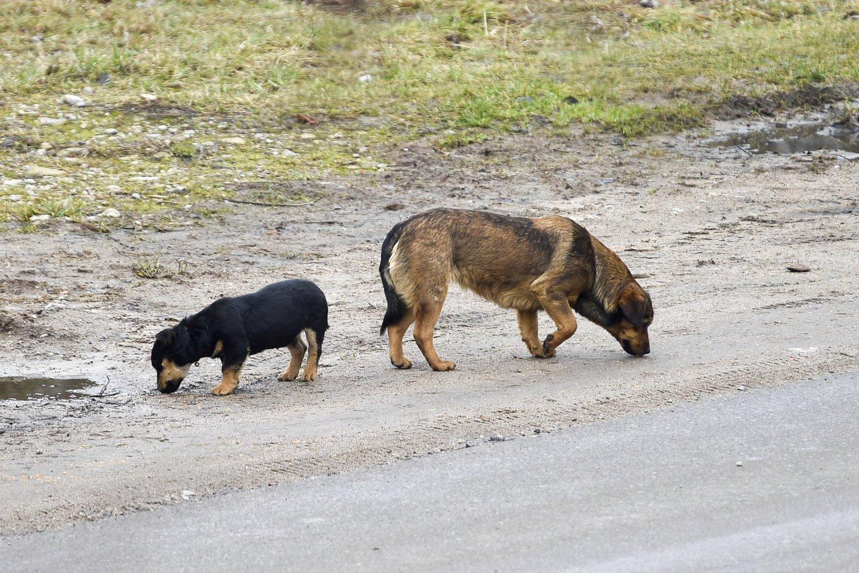 Šunys.<br>V.Ščiavinsko nuotr.