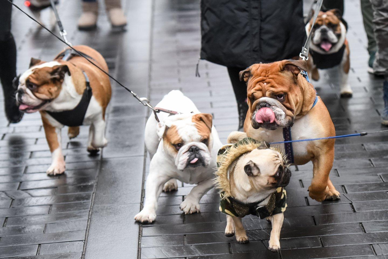Šunys.<br>D.Umbraso nuotr.