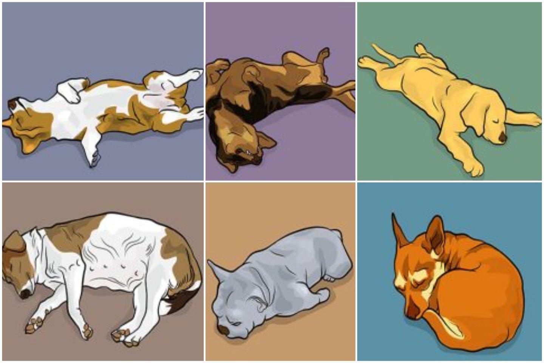 6 šunų miegojimo pozicijos. Ką jos pasako apie jūsų augintinį?<br>tavogyvunas.lt koliažas