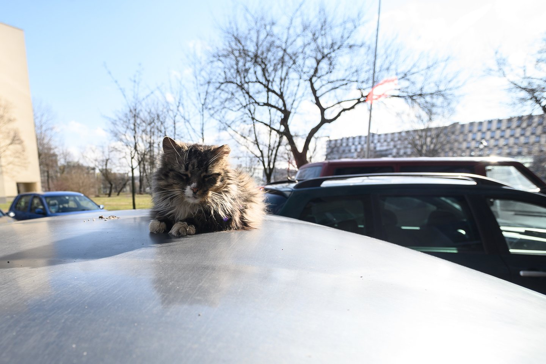 Katinas<br>V.Skaraičio nuotr.