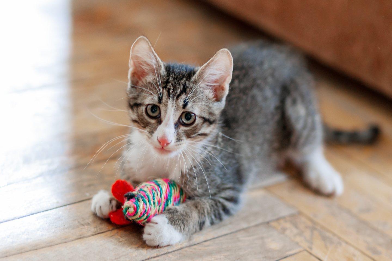 9 kačių veislės, kurios puikiai sutaria su vaikais.<br>123rf.com asociatyvi nuotr.