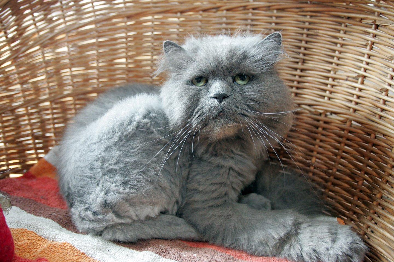 Katinas.<br>P.Mantauto nuotr.