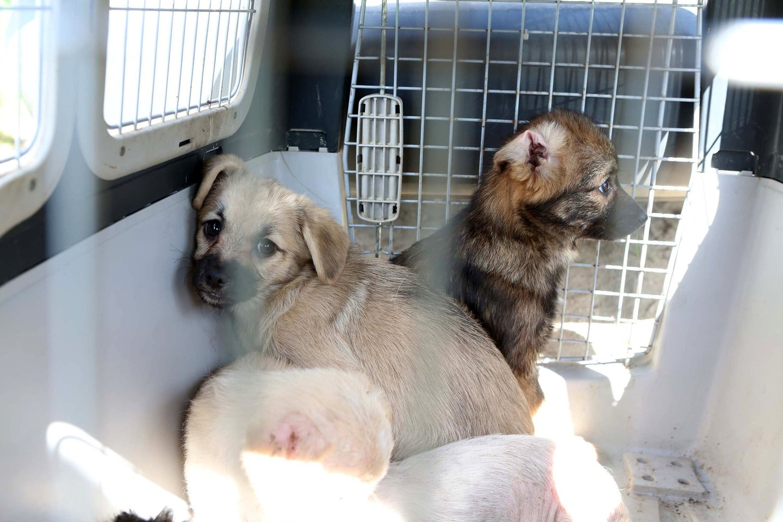 Žada nuspręsti dėl privalomo gyvūnų ženklinimo: įsigaliotų jau nuo gegužės.<br>M.Patašiaus nuotr.