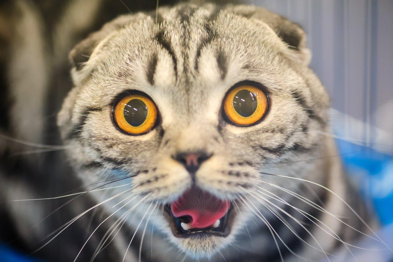 Tyrimas atskleidė, kodėl katės nebaus svetimo žmogaus, kuris jums kenkia.<br>123.com nuotr.
