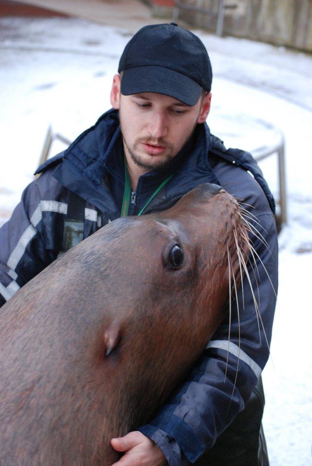Šiaurės jūrų liūto svoris gali siekti vieną toną.<br>Asmeninio archyvo nuotr.
