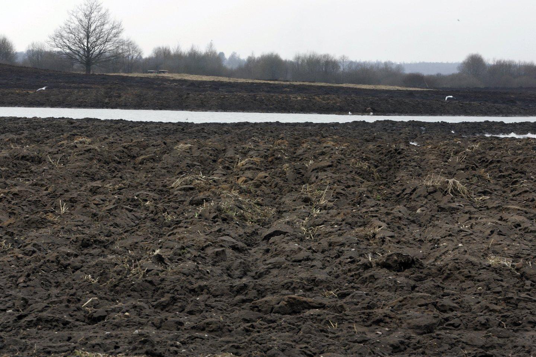 Parazitologai įspėja – pavasarį tirkite dirvožemį ir smėlio dėžes.<br>V.Balkūno asociatyvi nuotr.