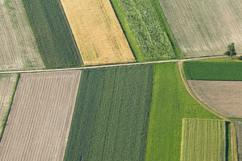 Europos Komisija pristatė ekologinės gamybos plėtros veiksmų planą.<br>123rf
