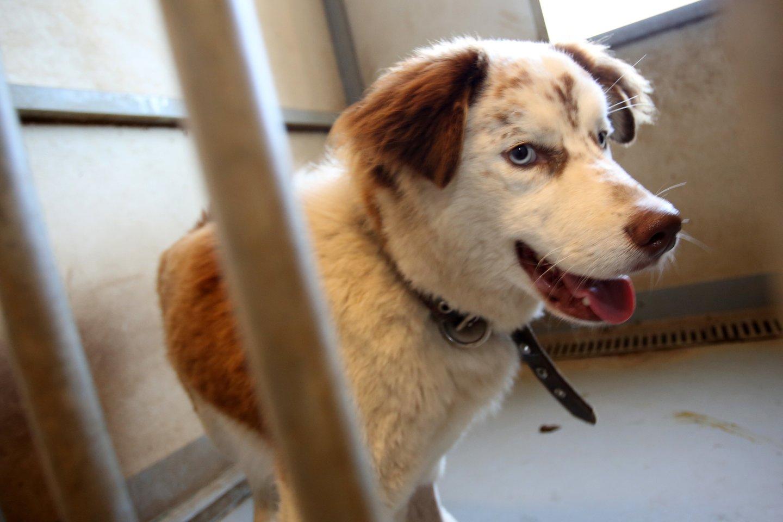 Seimas vilkina sprendimą dėl žiauraus elgesio su gyvūnais ir jų ženklinimo.<br>M.Patašiaus nuotr.