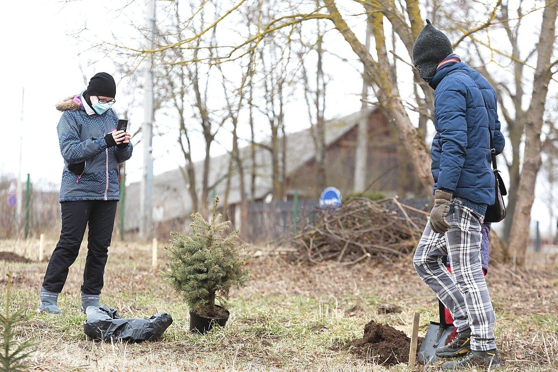 Agnė su Ramūnu Kalėdų eglę sodino antrą kartą, pernai jų medis neprigijo.