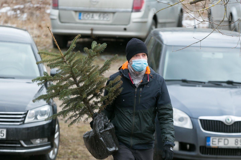 Vilniuje sodinamos Kalėdų eglutės.<br>T.Bauro nuotr.