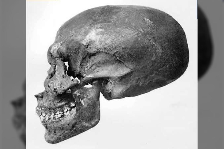 KV 55 kaukolė, 1912 m. nuotr.<br>FAPAB iliustr.