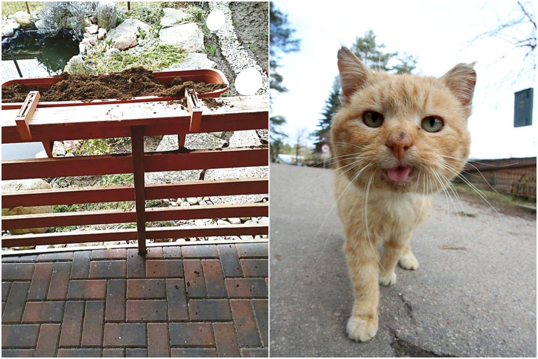Kovoje su gėles niokojančiu kaimynų katinu kavos tirščiai ir actas nepadės – veterinarijos gydytojas pasiūlė kitą priemonę.<br>Lrytas.lt koliažas