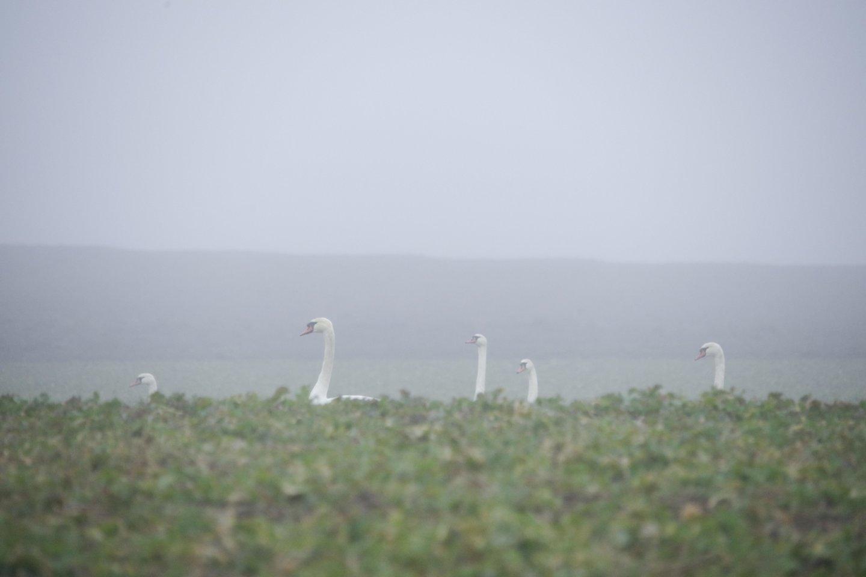 Paukščiai.<br>V. Ščiavinsko nuotr.