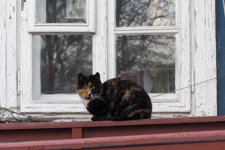 Katė.<br>V.Ščiavinsko asociatyvi nuotr.