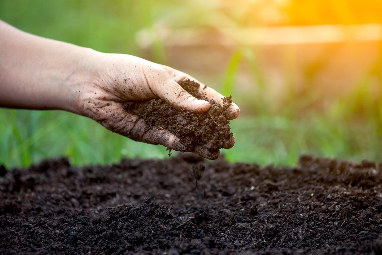 """""""Ekoagros"""" ekologiniuose ūkiuose atlieka ir dirvožemio tyrimus.<br>123rf.com nuotr."""