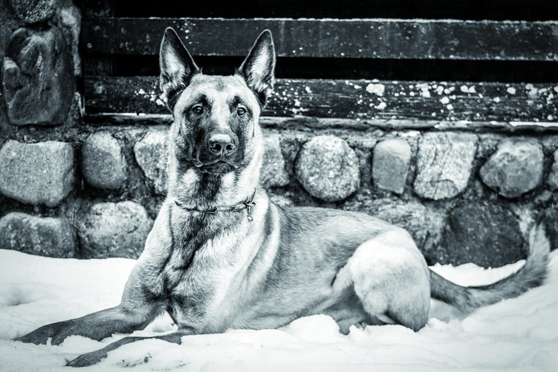 Patu – linksmas šuo.<br>Nuotr. iš asmeninio archyvo