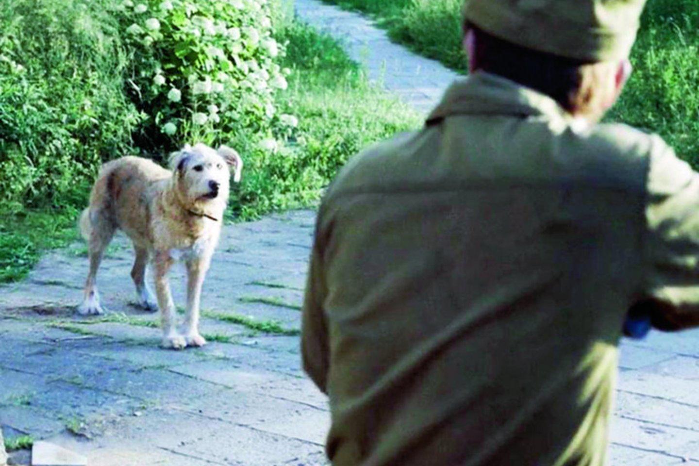 """Vienas šiurpiausių juostos epizodų – žudomi užkrėstame mieste bėgiojantys šunys.<br>Kadras iš mini serialo """"Černobylis""""."""