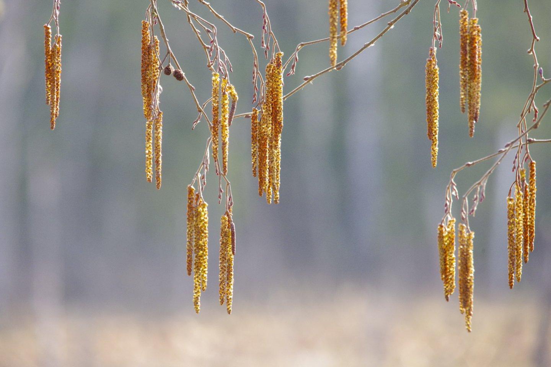Pavasaris Lietuvoje.<br>V.Ščiavinsko nuotr.