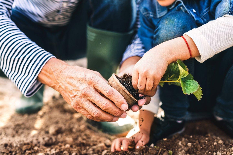 Patyrę sodininkai sodus ir daržus pataria prižiūrėti laiko patikrintomis priemonėmis, kurias kiekvienam pravartu turėti ir vaistinėlėje, ir lauko darbų sandėliuke.<br>shutterstock nuotr.