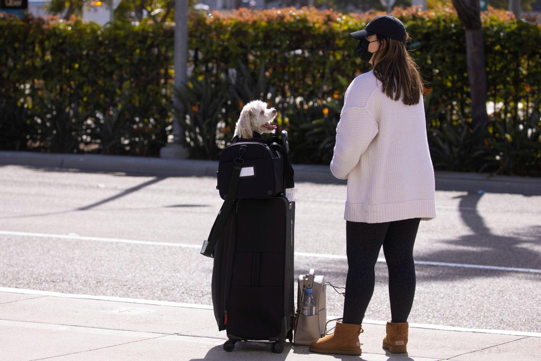 Įspėja dėl kelionių su augintiniu: priminė skaudžią istoriją, apie šuniuko kelionę į Norvegiją iš Lietuvos.<br>Reuters/Scanpix nuotr.