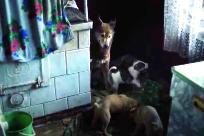 """""""Černobylyje"""" vaidino K.Grigaliūno apmokyti šunys.<br>Kadras iš mini serialo """"Černobylis""""."""