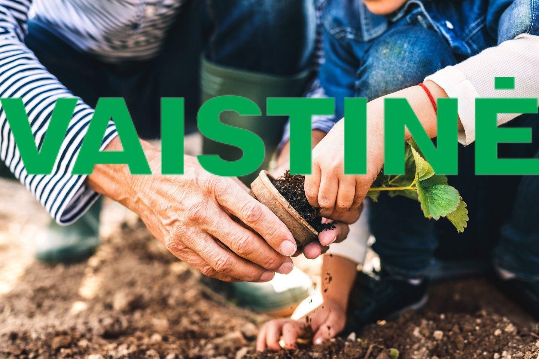 Patyrę sodininkai sodus ir daržus pataria prižiūrėti laiko patikrintomis priemonėmis, kurias kiekvienam pravartu turėti ir vaistinėlėje, ir lauko darbų sandėliuke.<br>shutterstock nuotr., lrytas.lt montažas
