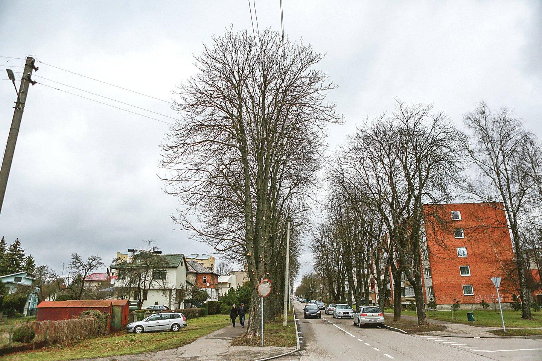 Žaliakalnyje medžiai nugenėti, kad šakų nekliudytų sunkiasvoriai automobiliai.<br>G.Bitvinsko nuotr.