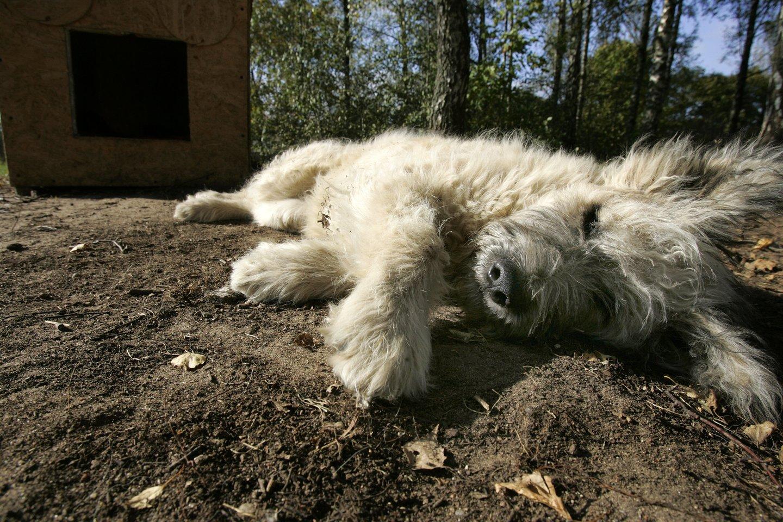 Kauno rajone girtas vyras strypu užmušė aklą sunkiai sergantį, aklą šunį.<br>Asociatyvi nuotr.