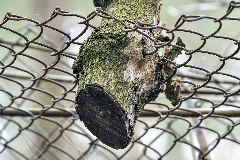 Seimas kelią skinasi įstatymo pataisos dėl baudų padidinimo už nelegalias tvoras, niokojamą miško paklotę ir nuotekų tvarkymą.<br>V.Ščiavinsko nuotr.