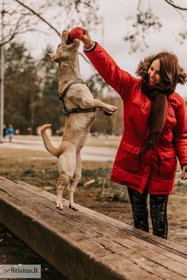 """""""Zara labai emocingas ir žaismingas šuo, kamuoliuką galėtų gaudyti visą dieną ir nepavargti"""", – apie priglaustą augintinę sako Deimantė ir Martynas.<br>G.Kniežaitės Novikovienės nuotr."""