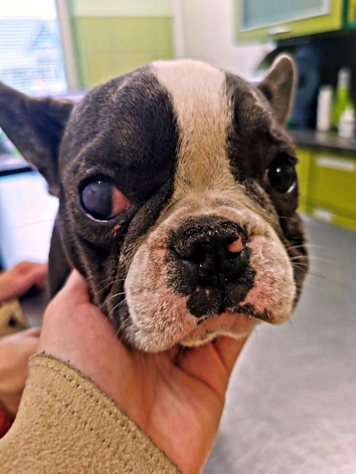 """Siekiama teismo keliu konfiskuoti šunys, siaubingomis sąlygomis laikytus Jonavos rajono veisykloje.<br>""""Dogspoto"""" nuotr."""