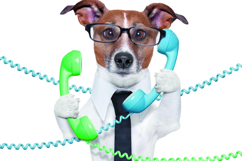 """Kodėl šunys nekalba kaip žmonės?<br>""""123rf.com"""" nuotr."""