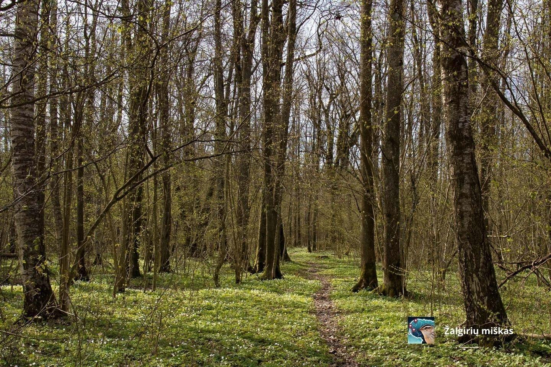 """Pasirašyta """"Europos miškų"""" deklaracija."""