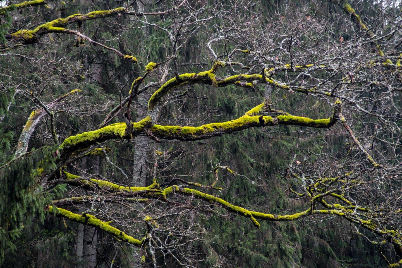 """Pasirašyta """"Europos miškų"""" deklaracija.<br>V.Ščiavinsko nuotr."""