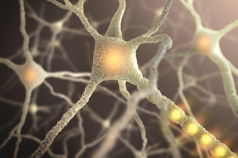Jungtys tarp neuronų yra stiprinamos nuolatinio mokymosi ir išmoktos medžiagos kartojimo metu.<br>123rf iliustr.