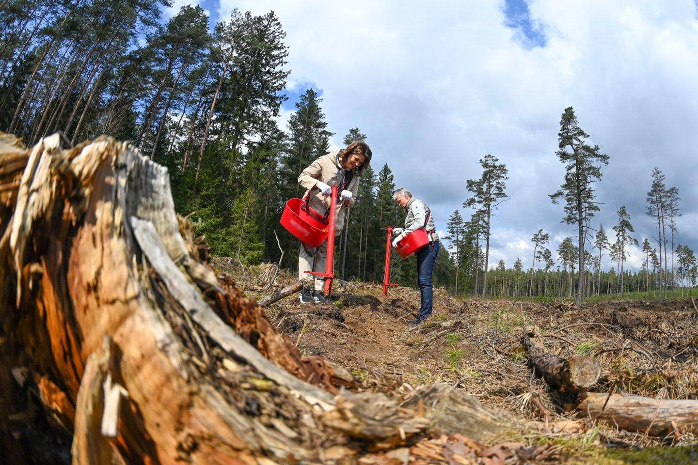 G.Nausėda ir D.Nausėdienė dalyvavo miškasodyje.<br>Lietuvos Respublikos Prezidento kanceliarijos (R.Dačkaus) nuotr.