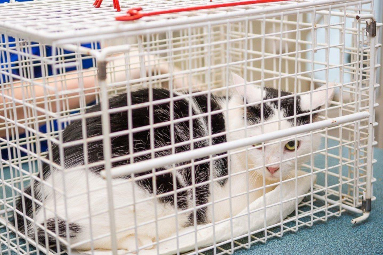 Įstatyme numatoma, kad katės, šunys ir šeškai turės būti paženklinti per 4 mėnesius nuo jų atvedimo, bet ne vėliau kaip iki jų perdavimo kitam savininkui.<br>R.Ančerevičiaus nuotr.