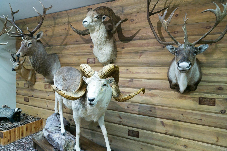 Antano Truskausko medžioklės ir gamtos ekspozicijos.<br>T.Bauro nuotr.