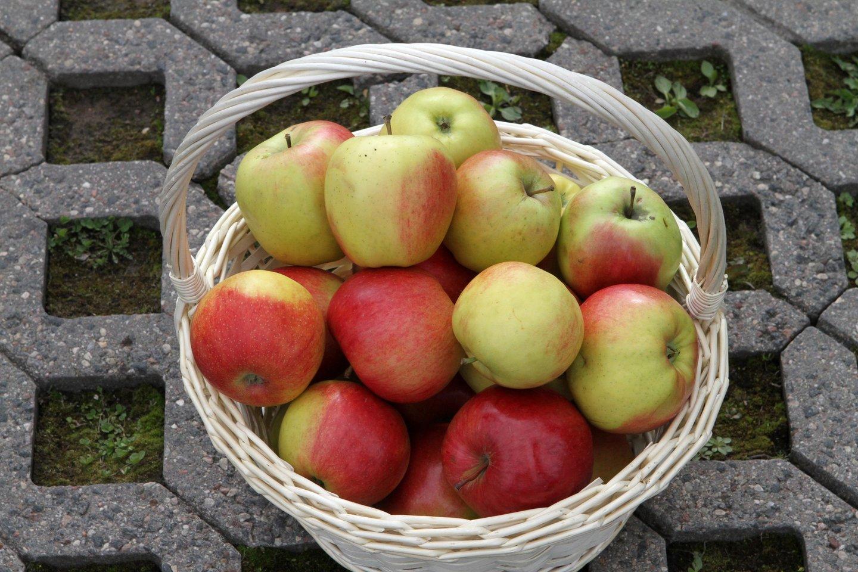 Obuoliai.<br>M.Patašiaus nuotr.