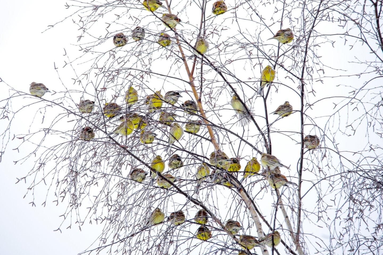 Kviečiame pasitikrinti, kiek žinote apie Lietuvoje gyvenančius ir mūsų šalyje matomus paukščius.<br>V. Ščiavinsko nuotr.