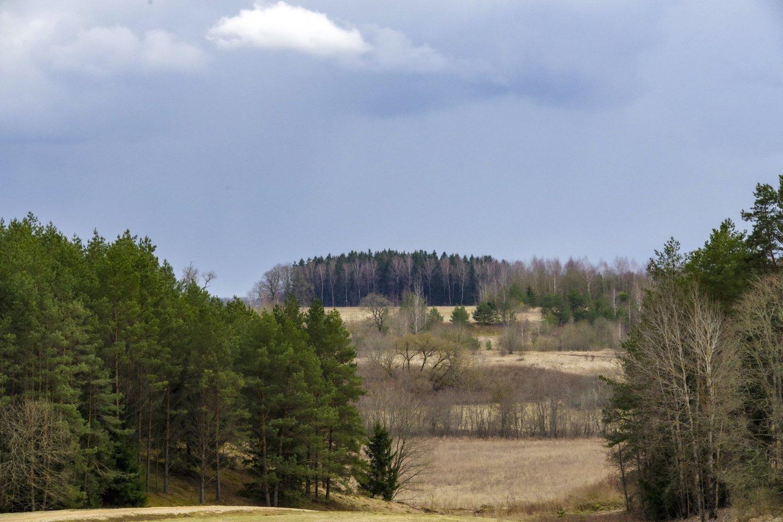 Įsibėgėja nacionalinis miškų susitarimas<br>V.Ščiavinsko nuotr.