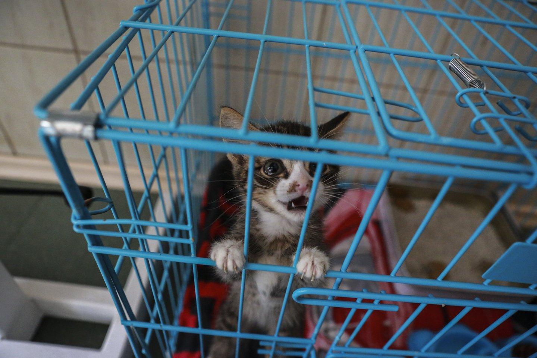 Reikėtų iš anksto pasiruošti gyvūnų iš prieglaudos priežiūrai.<br>G.Bitvinsko nuotr.