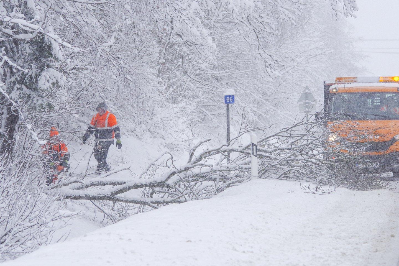 Dėl iškritusio gausaus sniego nemažai medžių šią žiemą buvo išlaužyta.<br>V.Ščiavinsko nuotr.