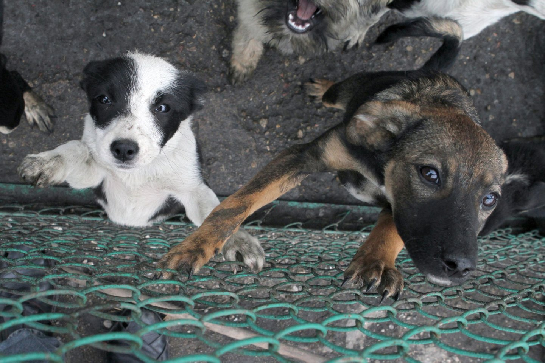 Nuo gegužės 1 d. įsigalioja nauja gyvūnų pardavimo tvarka: svarbiausi pokyčiai ir draudimai.<br>M.Patašiaus nuotr.
