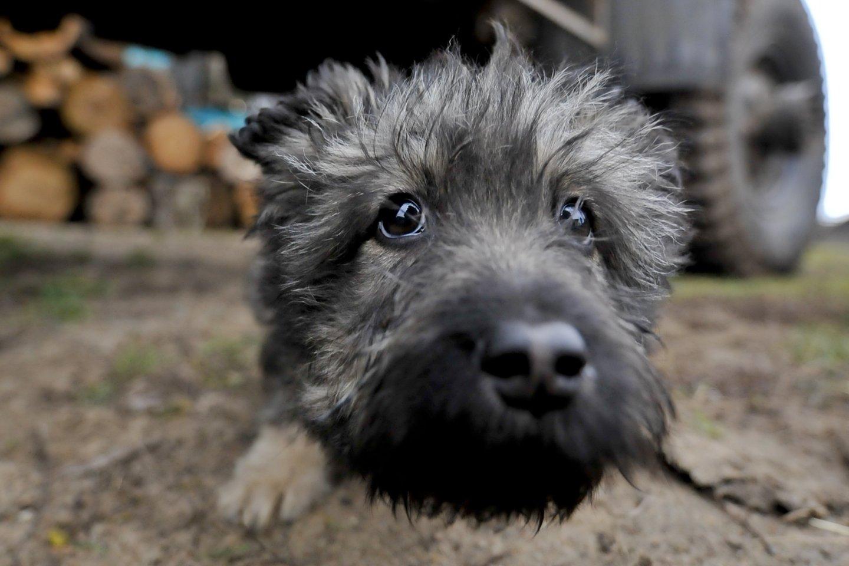 Nuo gegužės 1 d. įsigalioja nauja gyvūnų pardavimo tvarka: svarbiausi pokyčiai ir draudimai.<br>V.Ščiavinsko nuotr.