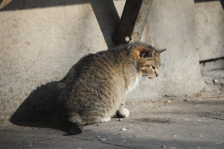 Apsisprendė, kas Kaune rūpinsis šeimininkų neturinčiais gyvūnais.<br>D.Umbraso nuotr.