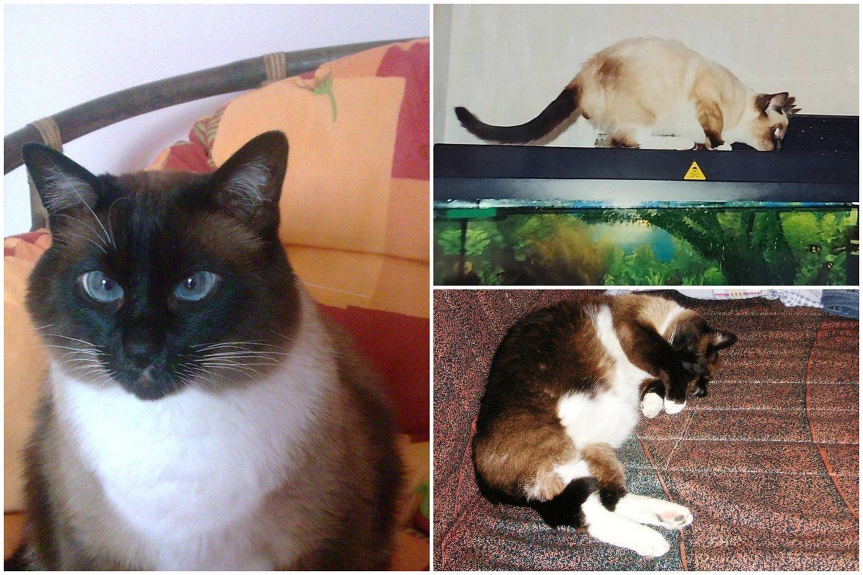 Katinas Lizarijus klaipėdiečių šeimoje gyvena jau ketvirtį amžiaus.<br>Šeimos archyvo nuotr.