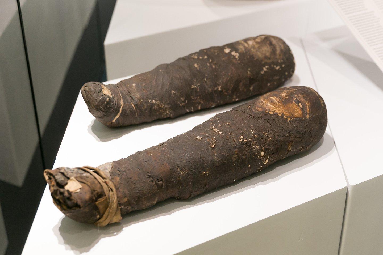 Padirbtos vaikų mumijos.<br>T. Bauro nuotr.